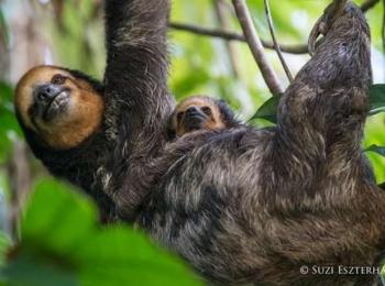 Sloth Island