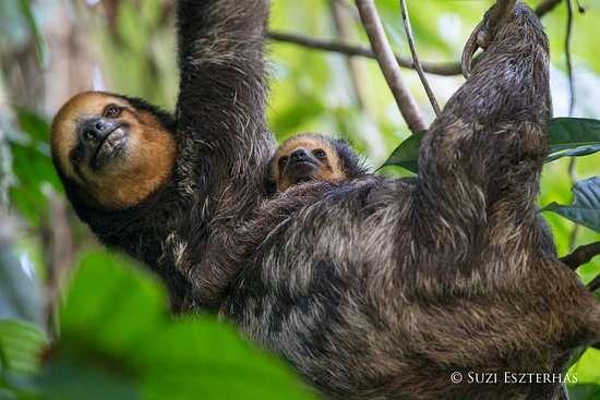 sloth-island